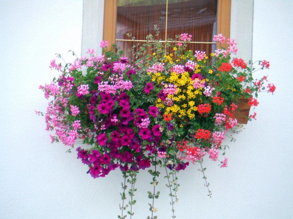 balcone_fiorito