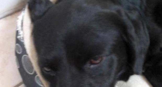Capaccio, spezzano la schiena ad un cucciolo: è gara di solidarietà