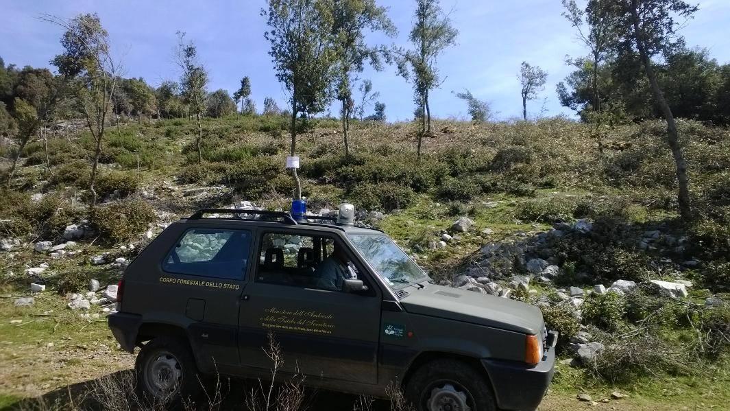 Ancora taglio abusivo d'alberi nel Cilento, scattano le denunce