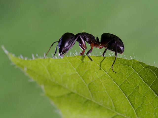 Cilento, la leggenda delle formiche