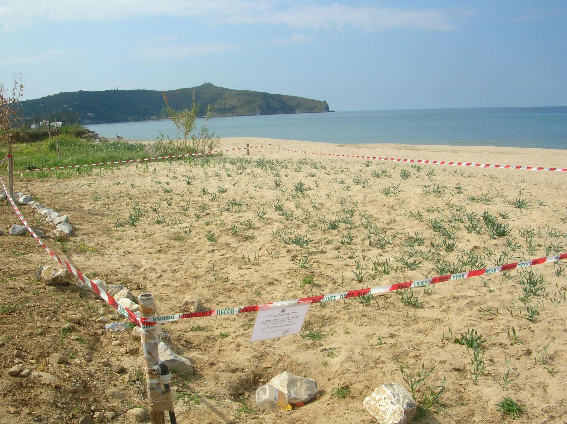 foto-spiaggia-Saline-Palinuro