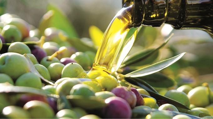 Ecco l'olio del Parco del Cilento: sarà un veicolo promozionale per il territorio