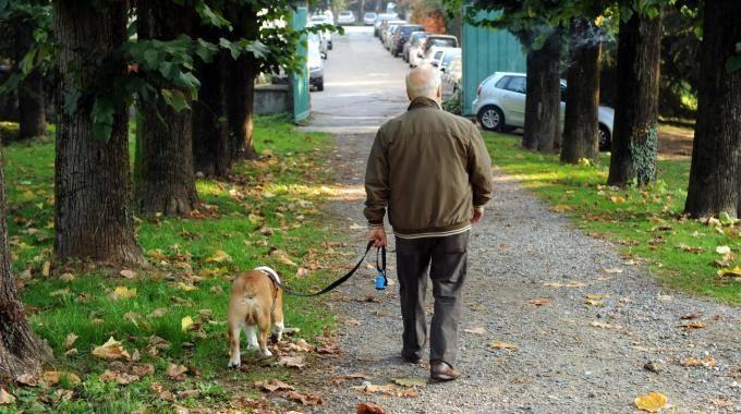 Sanza: i cani disturbano? Multa ai proprietari