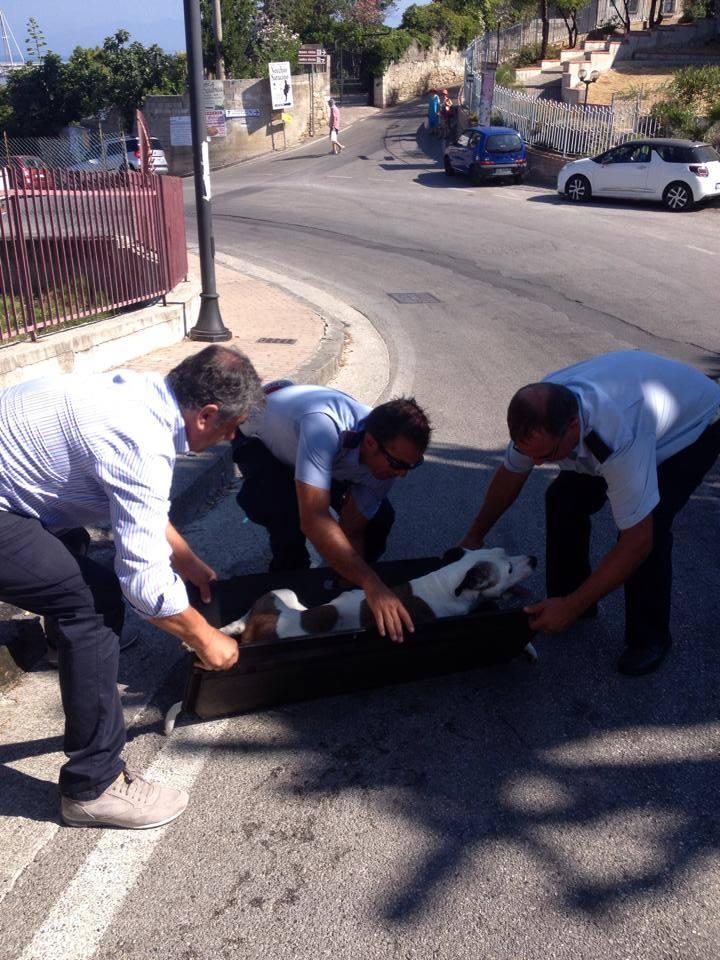 Agropoli: cane ucciso da un'auto in corsa, inutile la gara di solidarietà