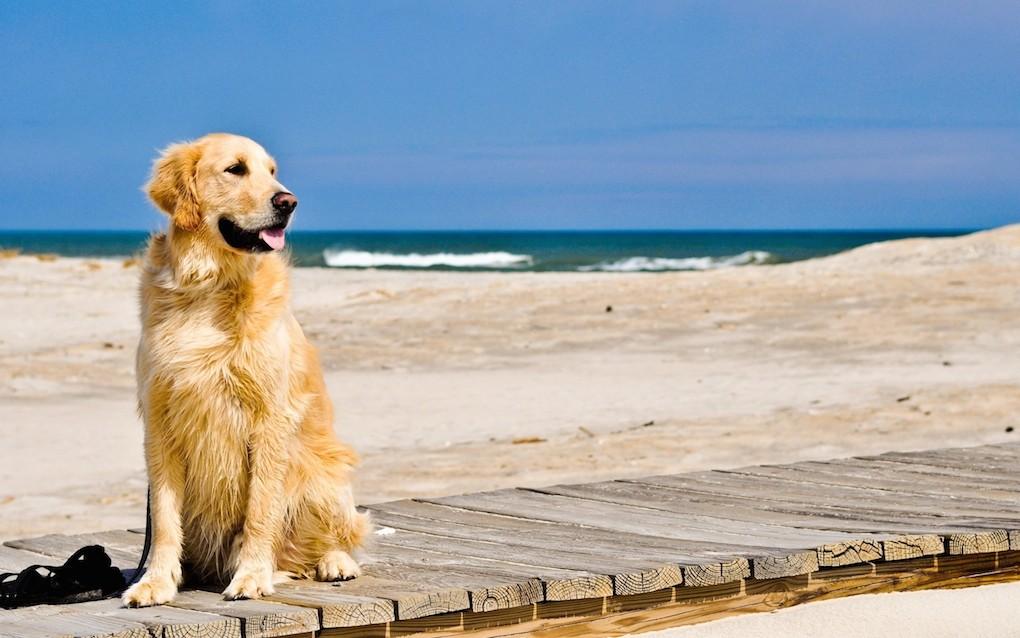 Anche nel Cilento si potrà portare il cane a mare, ecco le bau bau beach