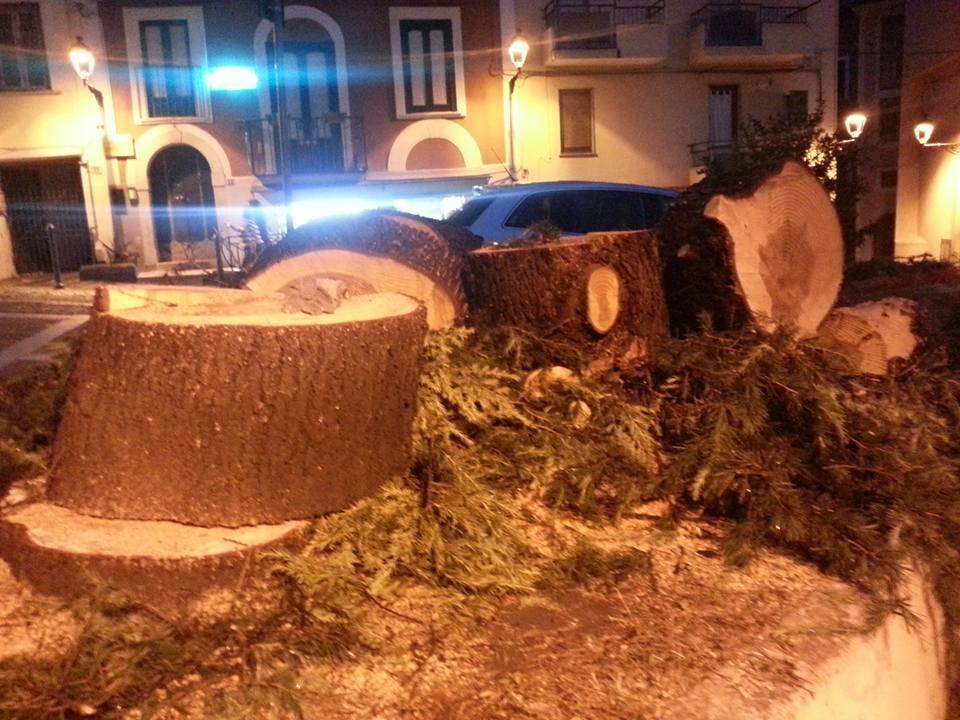 alberi_sala_consilina