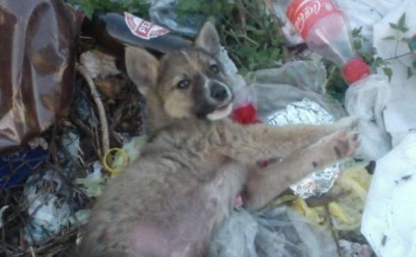 Stazione trasformata in discarica. Cuccioli di cane tra i rifiuti: la denuncia