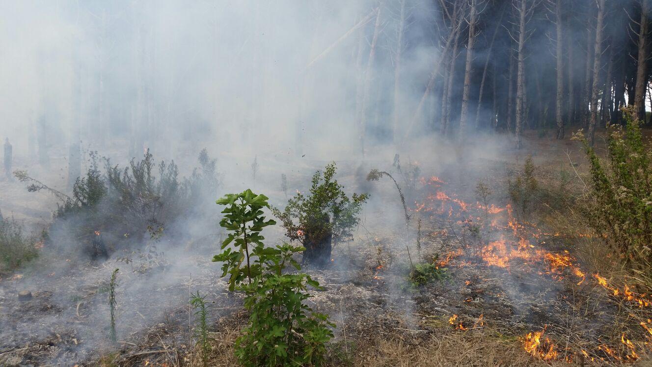 incendi pineta