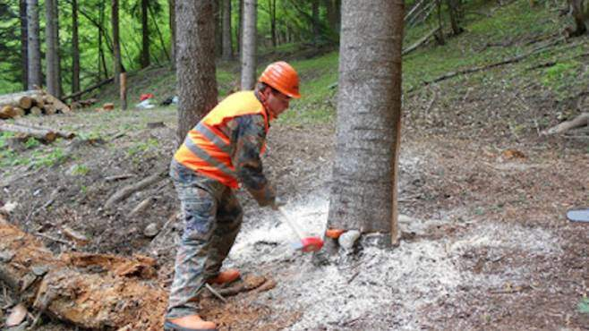 piano esecutivo forestazione
