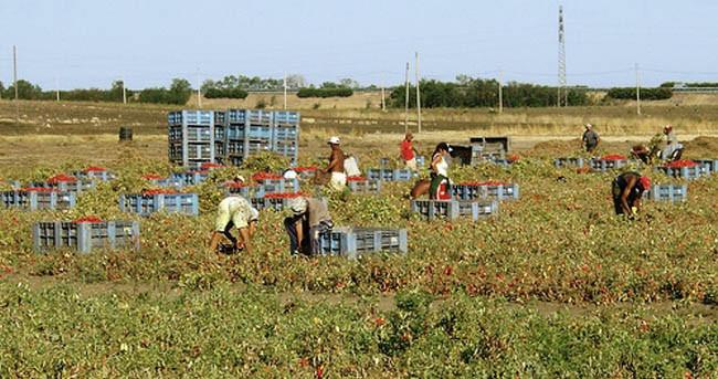 Contrasto al lavoro nero, denunciato agricoltore