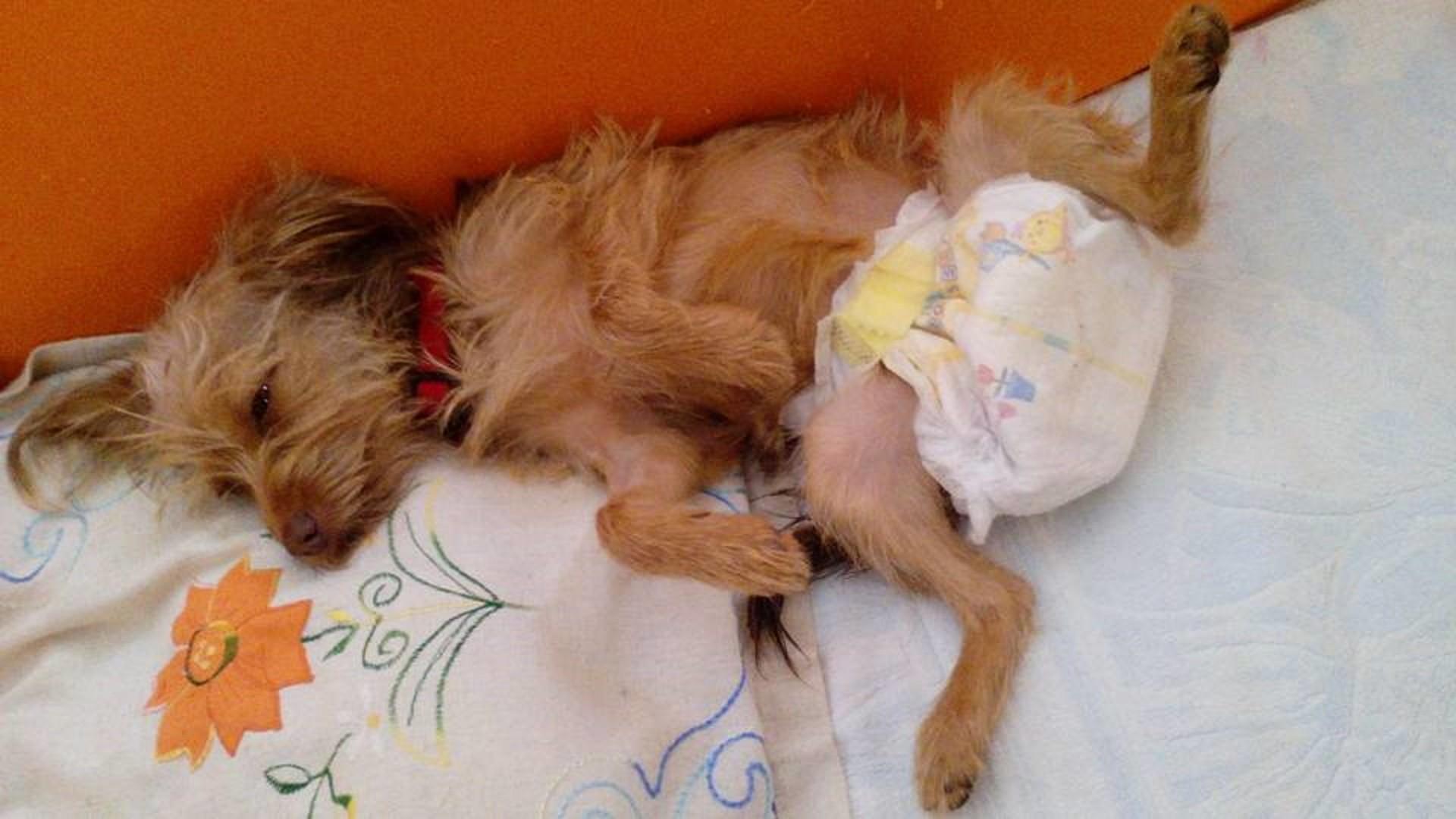 Shock a Capaccio: colpo di fucile contro un cane, resterà paralizzato
