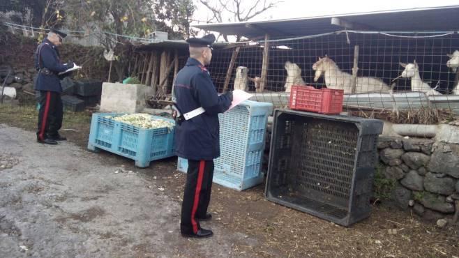carabinieri_capre