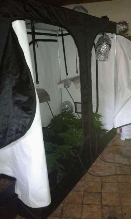 Sassano: serra nel garage per la coltivazione della cannabis, arrestato