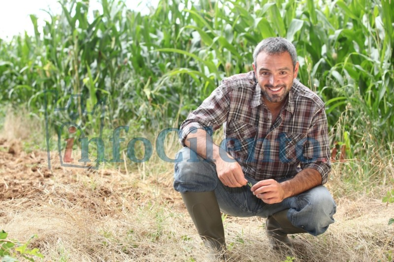 Agricoltura, al via il PSR Campania 2014/2020. Pubblicati i primi bandi