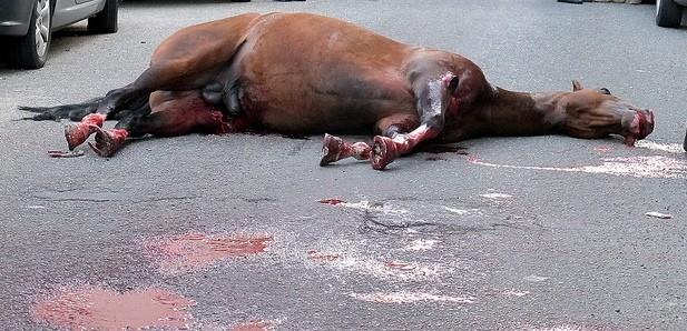 Investe ed uccide un cavallo: 52enne finisce in ospedale