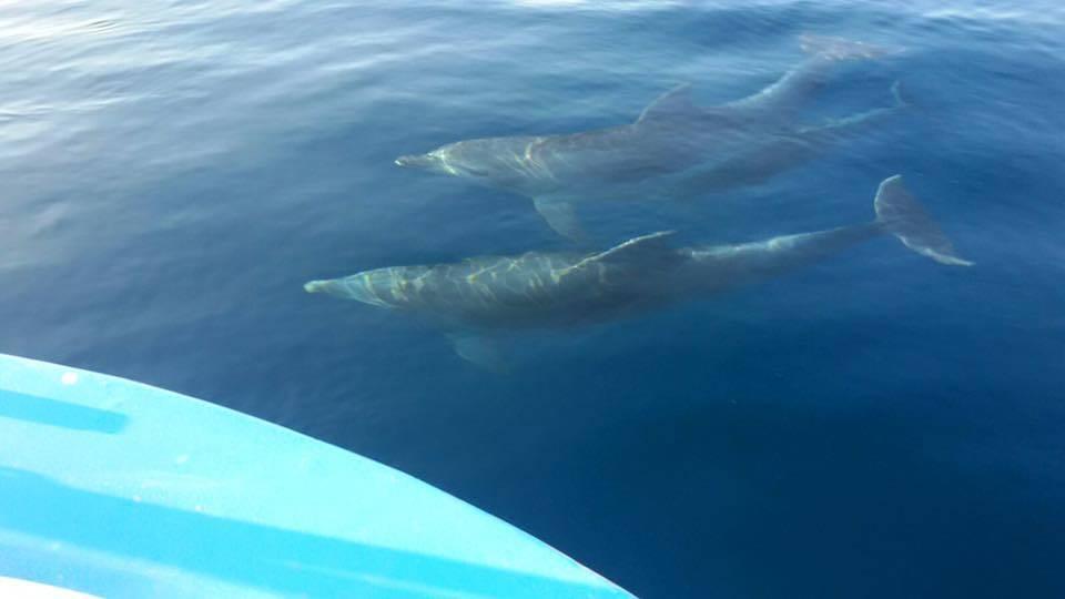 Delfini nelle acque del Cilento: eccoli nuotare a pochi metri dalle imbarcazioni