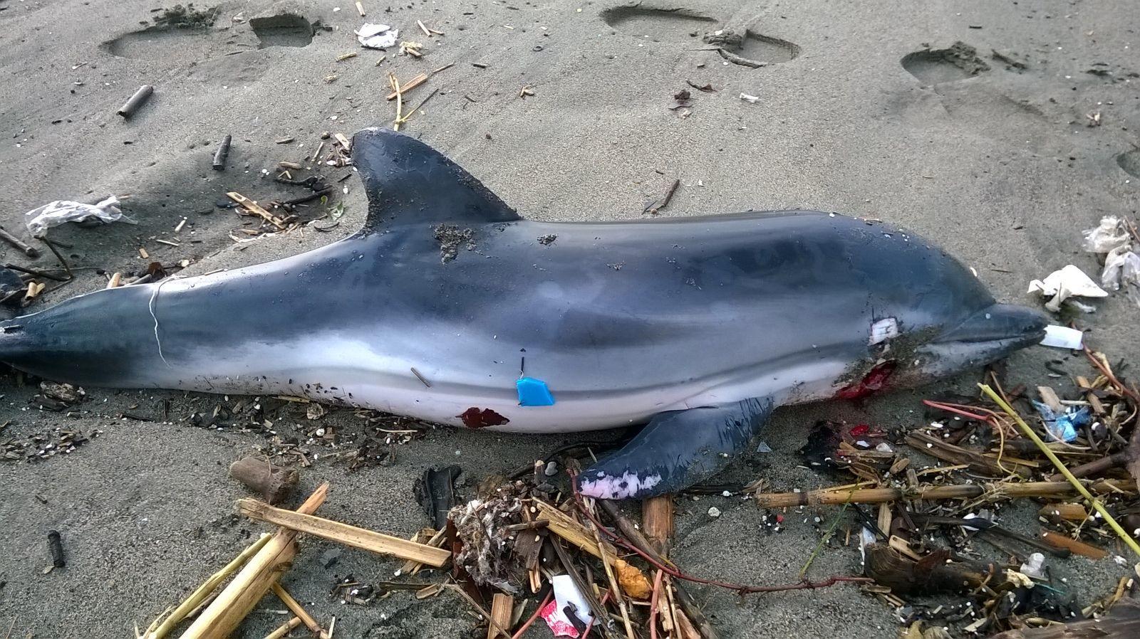 delfino_spiaggiato
