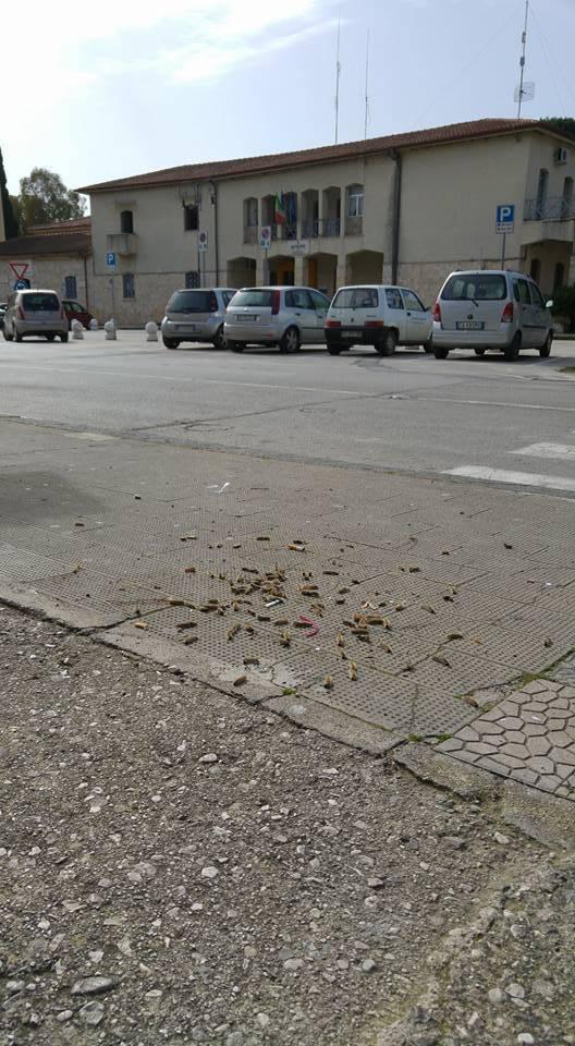 capaccio_processionaria