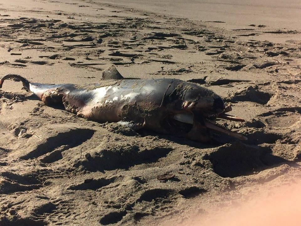 delfino_spiaggia