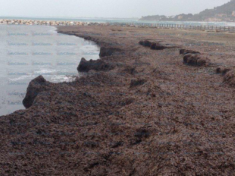 Lido Azzurro: alghe sul litorale e nuovo rischio erosione. La situazione | FOTO