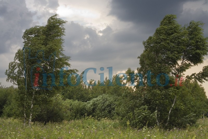 vento_alberi