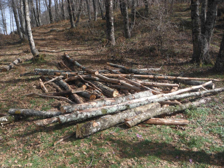 taglio_alberi-1500