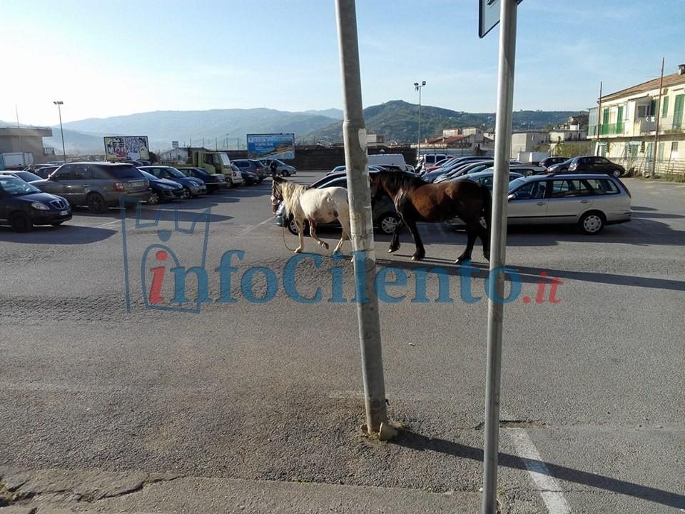 Agropoli, cavalli a spasso in pieno centro