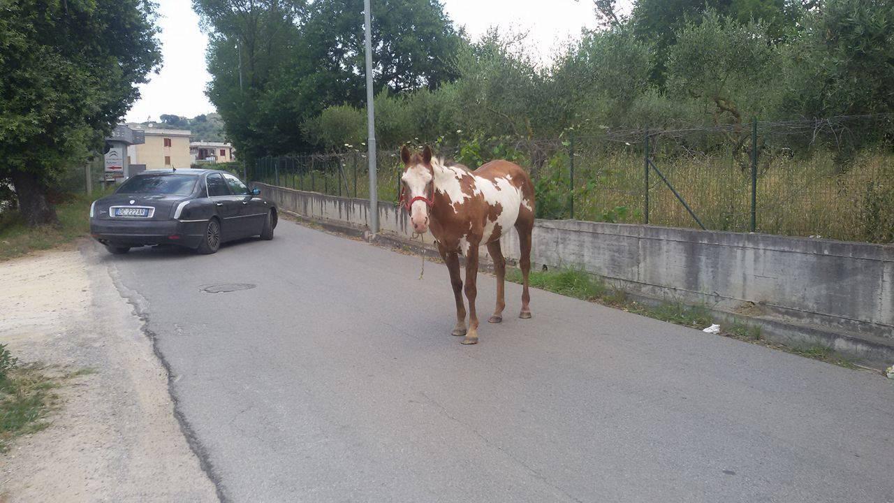 cavallo_agropoli