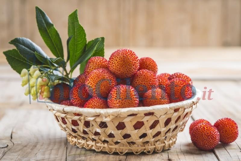 Photo of Il corbezzolo: una pianta ornamentale ricca di caratteristiche e proprietà benefiche