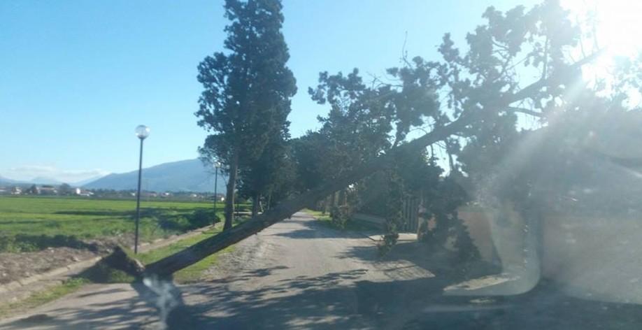 Maltempo, disagi sul territorio: rami ed alberi spezzati dal vento