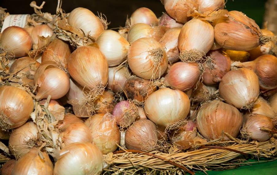 Photo of Vatolla, la semina della cipolla diventa un evento