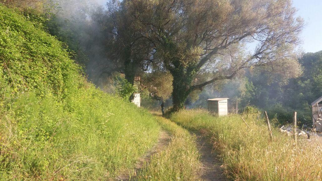 Vallo della Lucania, incendio lambisce ospedale San Luca | FOTO