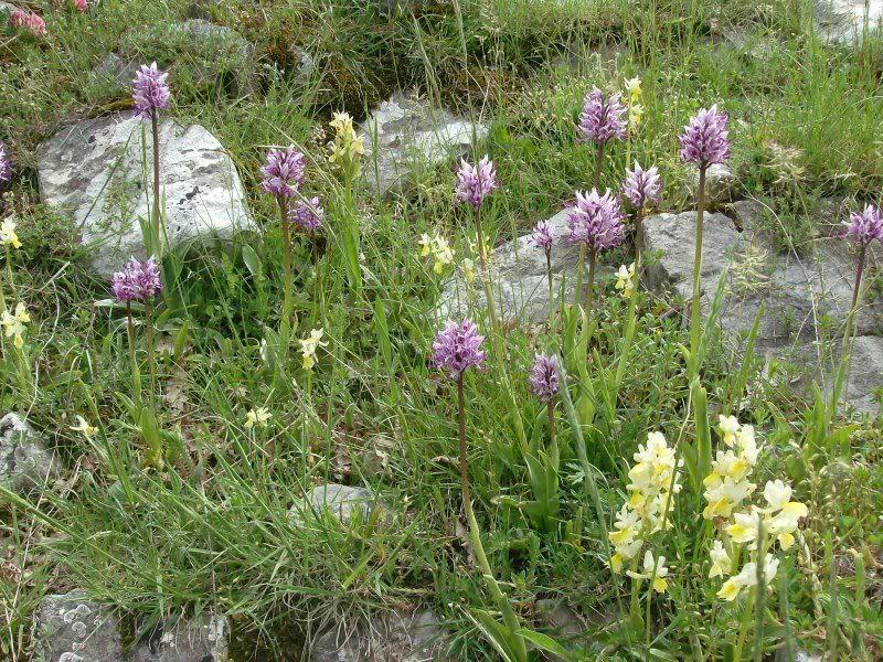 """Si conclude """"La Valle delle Orchidee"""", una giornata tra natura, cultura e tradizione nel cuore del Parco"""