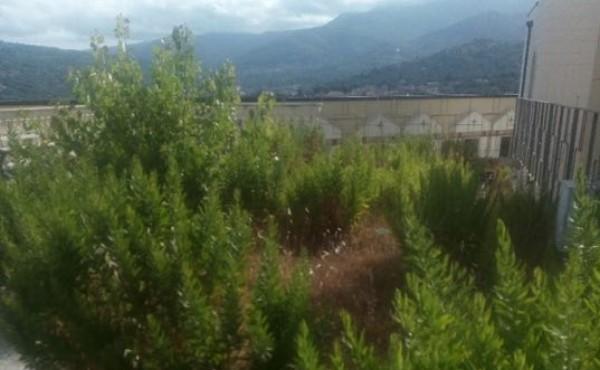 Vallo della Lucania, degrado al cimitero: è ancora polemica