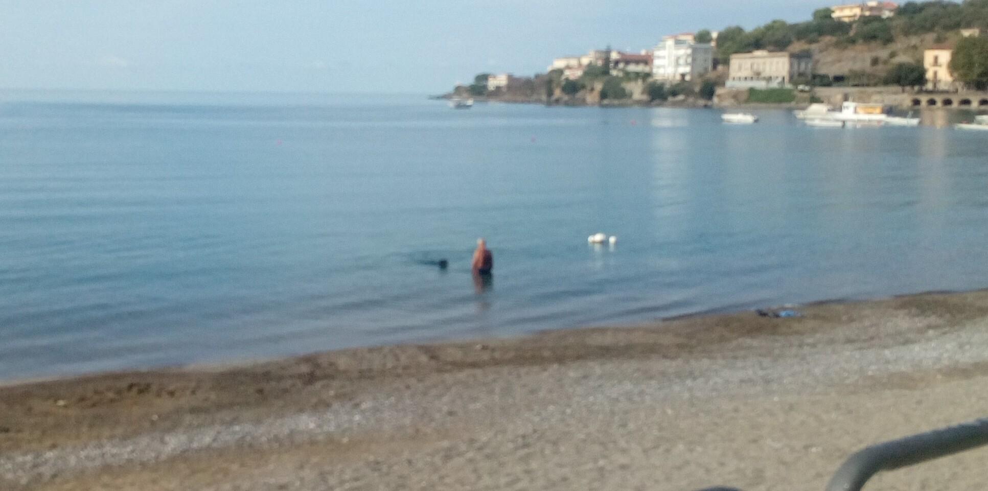 Bagno in mare con il proprio cane polemica info cilento - Bagno cane dopo antipulci ...