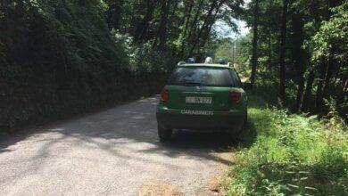 Photo of Scoprirono coltivazione di stupefacenti: elogio per i Carabinieri Forestali di Sessa Cilento