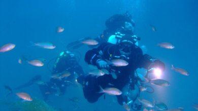 Photo of Vita da sub, tutto quello che ti occorre? Passione per i fondali e Nautica Mare