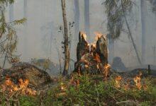 Photo of Rischio incendi: a Capaccio Paestum fino a 10mila euro di multa per chi li provoca