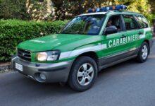 Photo of Capaccio, raccolta di tartufi in pineta: controlli e sanzioni