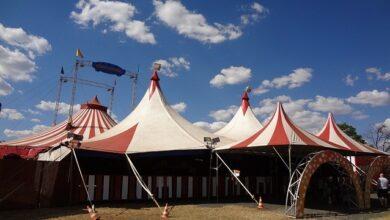 Photo of Svolta in Campania: no agli animali al circo