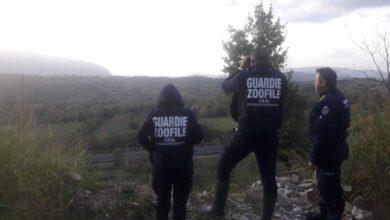 Photo of Armi irregolari per la caccia al cinghiale: denunciati cacciatori nel salernitano