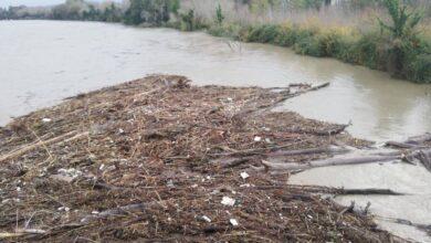 Photo of Danni in Campania, Confagricoltura chiede stato di calamità