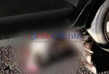 Photo of Aquara, auto contro cinghiale: paura per 45enne