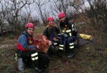 Photo of Sant'Angelo: cane cade in un dirupo: salvato