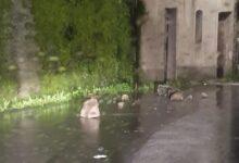 Photo of Aquara, massi minacciano il centro abitato: strada chiusa