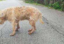Photo of Agropoli, dopo dieci anni ritrova il cane che aveva smarrito