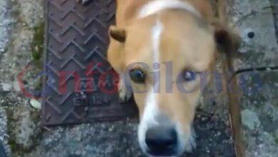 Photo of Ottati: ucciso Billo, il cane adottato dalla comunità
