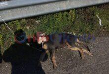 Photo of Vallo Scalo: salvata cagna abbandonato sulla cilentana