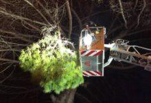 Photo of Capaccio Paestum, disagi nella notte a causa del vento