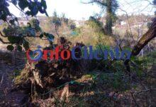 Photo of Maltempo a Castelnuovo: alberi abbattuti dal vento